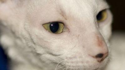 Czy istnieją koty dla alergików?