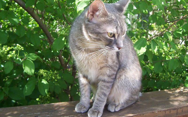 Jak chronić kota przed kleszczami?