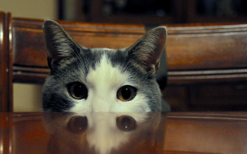 Jak często karmić kota?