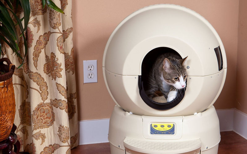 Kuwety dla kotów