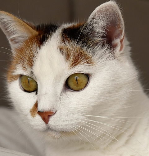 Lepszy jest kocur czy kotka?