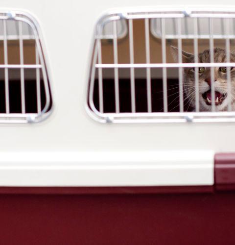 Transportery dla kotów
