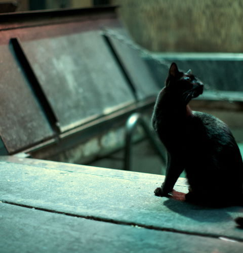 Zmysły kota