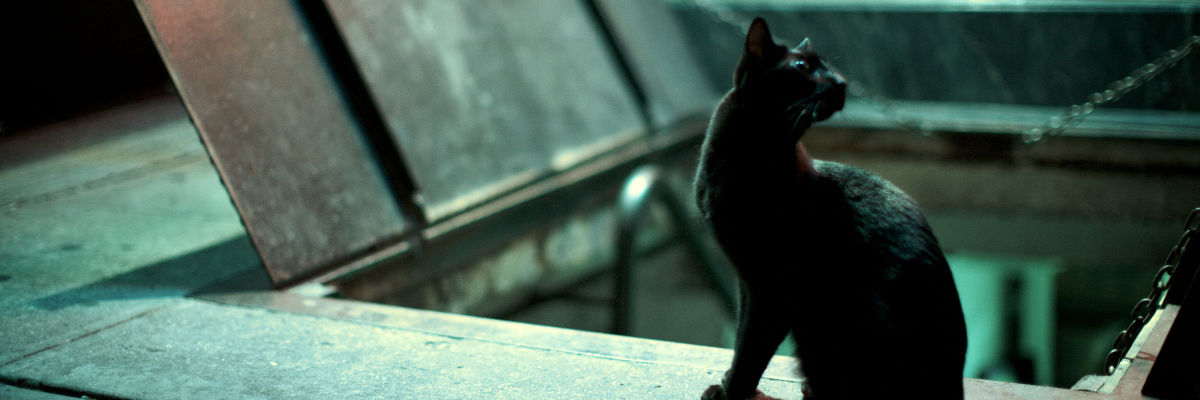 Permalink to:Zmysły kota