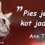 Cytaty o kotach - Ann Taylor