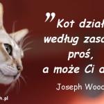 Cytaty o kotach - Joseph Wood-Krutch