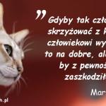 Cytaty o kotach - Mark Twain