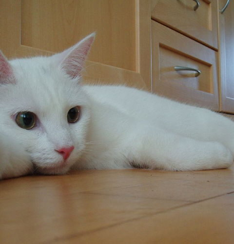 Dlaczego kot sika poza kuwetą?