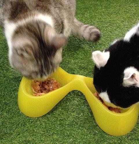 Miski dla kotów