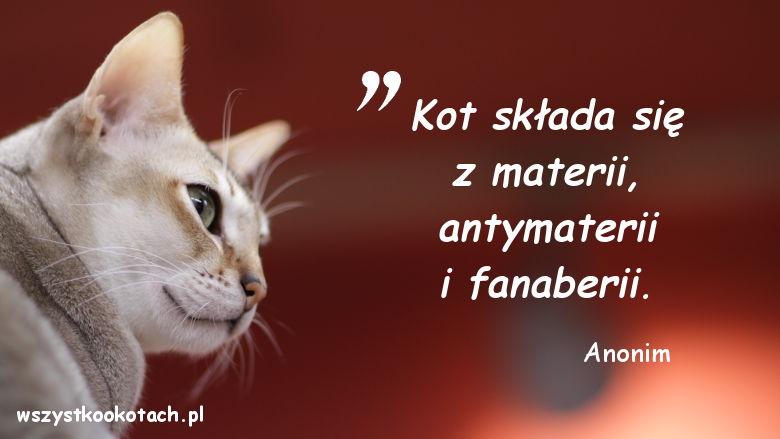 Cytaty o kotach - Anonim