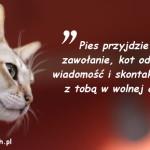 Cytaty o kotach - Mary Bly