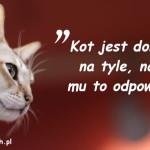 Cytaty o kotach - Saki