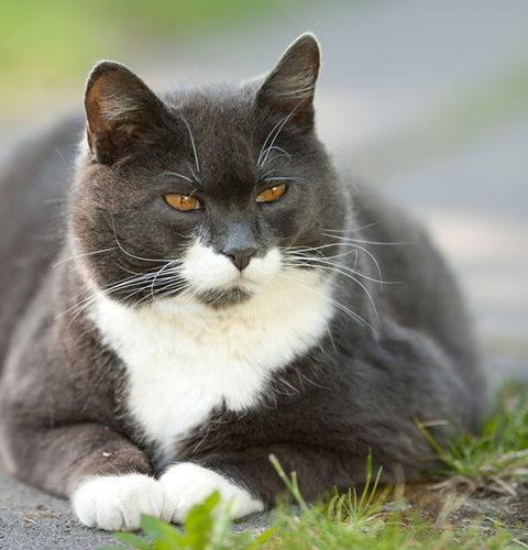 Czy kot musi wychodzićna dwór?