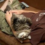 Dlaczego kot ugnita nas łapkami?