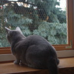 Osiatkuj balkon i okna, bo kot wypadnie