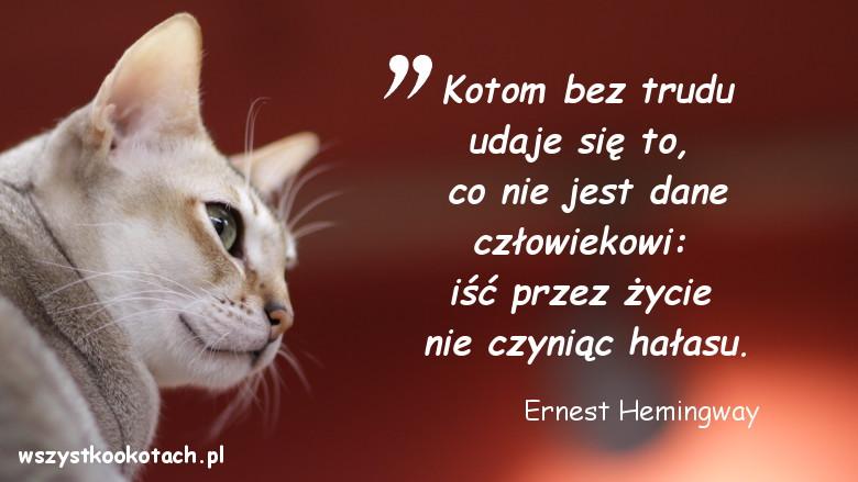 Cytaty o kotach - Ernest Hemingway
