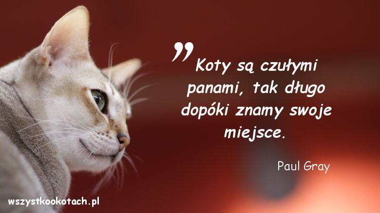 Cytaty o kotach - Paul Gray