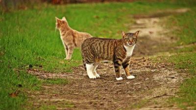 Czy kot jest samotnikiem?