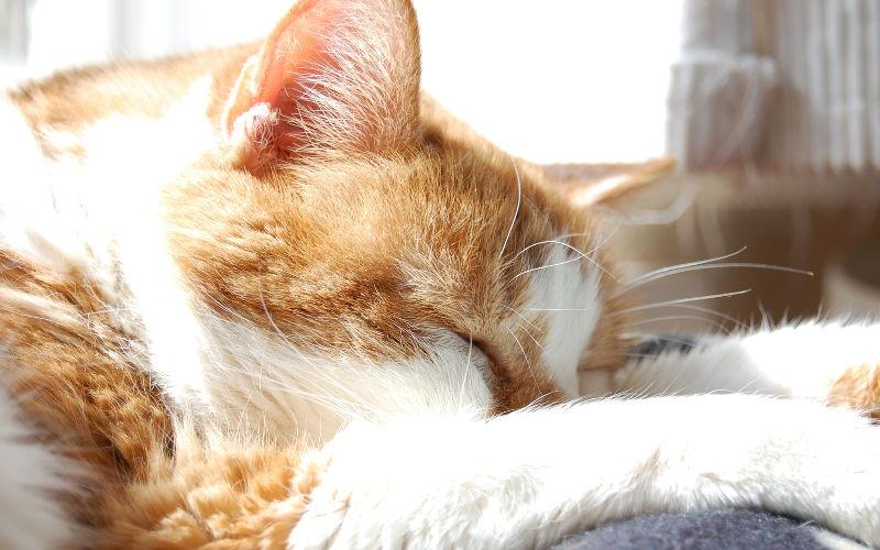 Jak pomóc kotu przetrwać upały