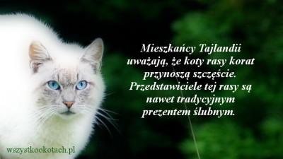 Jakie koty przynoszą szczęście w Tajlandii?