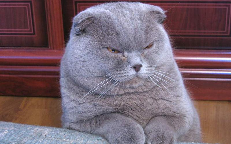 Jasne i ciemne umaszczenia u kotów