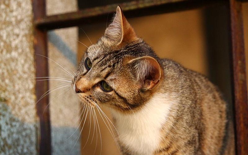 Kastracja a sterylizacja kota?