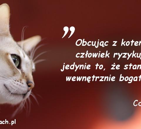 Cytaty o kotach - Colette