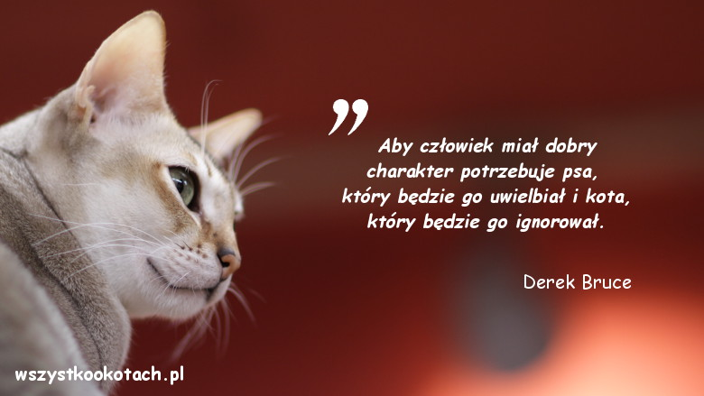 Cytaty o kotach - Derek Bruce