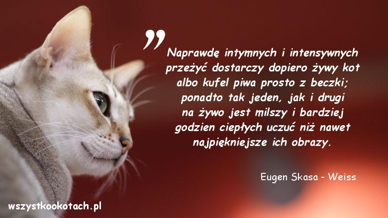 Cytaty o kotach - Eugen Skasa-Weiss 2