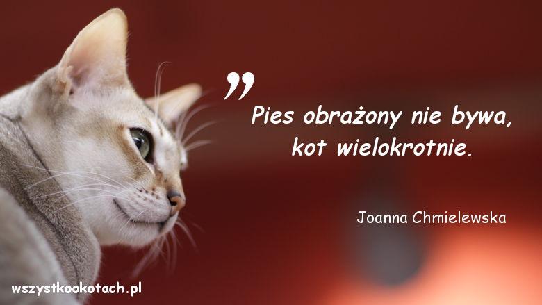Cytaty o kotach - Joanna Chmielewska