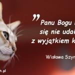 Cytaty o kotach - Wisława Szymborska