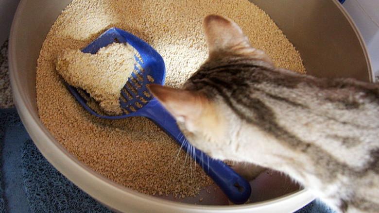 Czy każdy kot musi mieć swoją kuwetę?