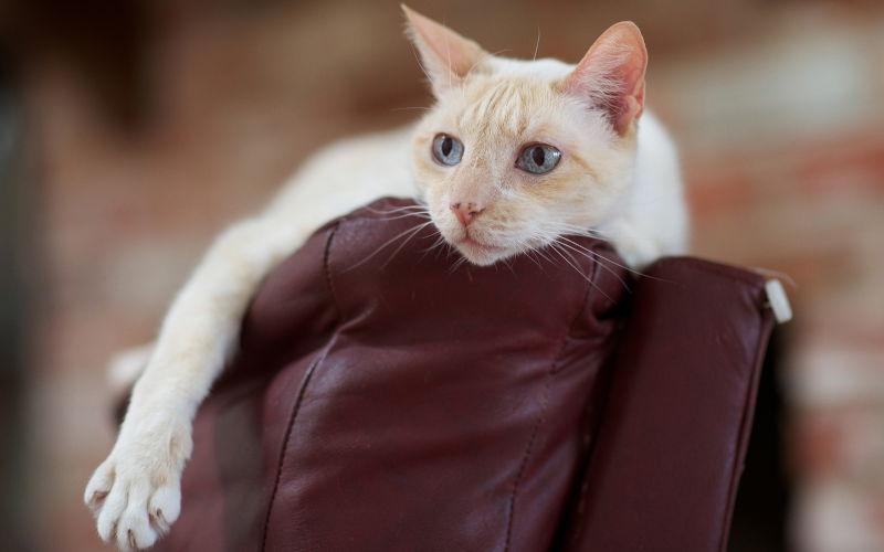 Dlaczego kot drapie meble?