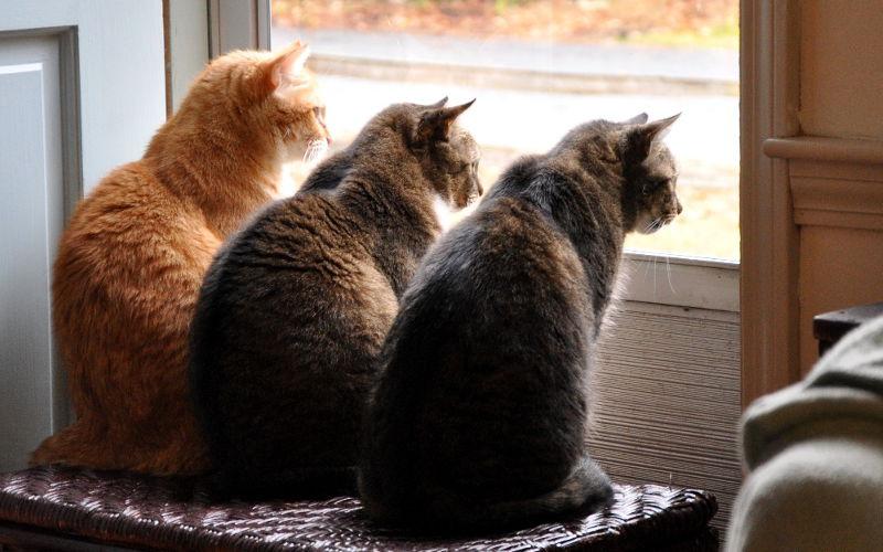 Dlaczego kot kłapie zębami na widok ptaka za oknem?
