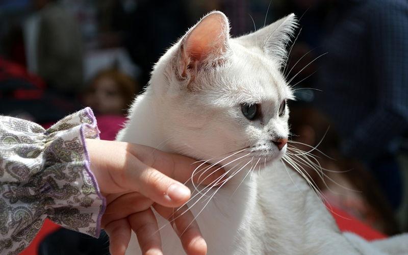 Dlaczego kot lubu być głaskanym?