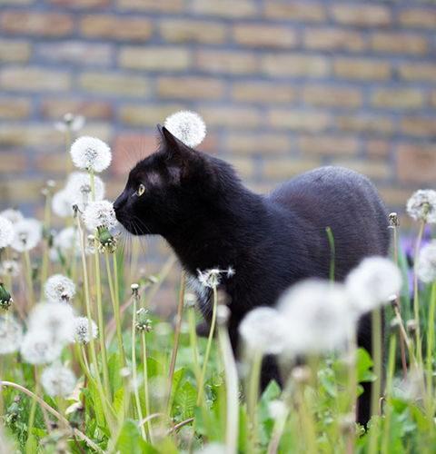 Dlaczego koty robią czasami dziwną minę?