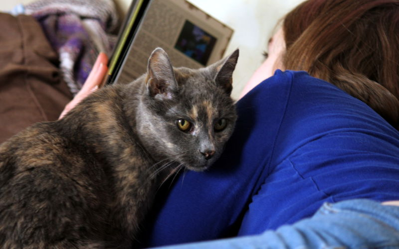 Dlaczego kot się o nas ociera?