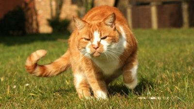 Dlaczego kot zakopuje odchody?