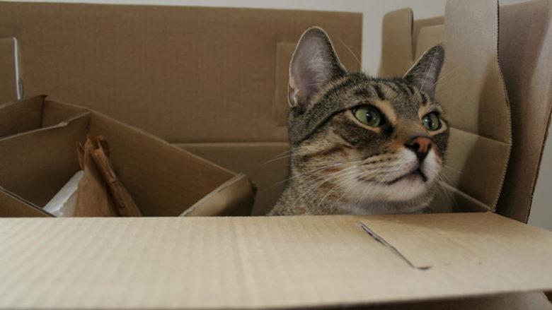 Dlaczego koty lubią pudełka?