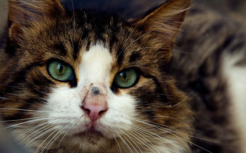 Dlaczego źrenice kocich oczu się zwężają?