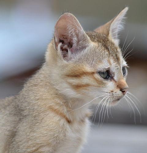 Kociak czy kot dorosły?