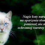 Oparzenia słoneczne u kotow bezwłosych