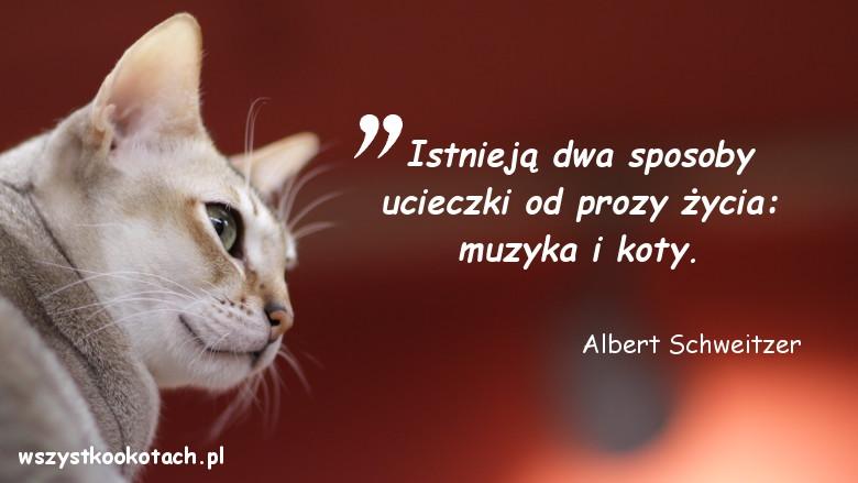 Cytaty o kotach - Albert Schweitzer