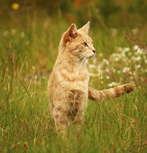 Czy kotki znaczą teren?