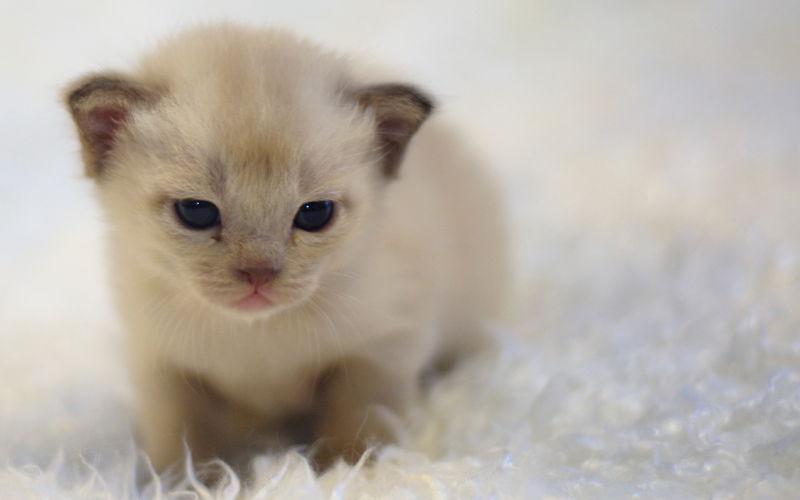 Czy koty mają pępki?