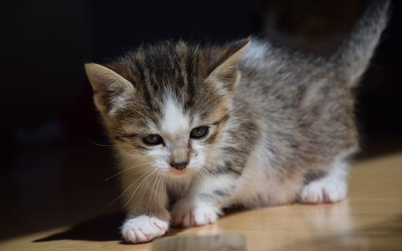 Czy koty mają zęby mleczne?