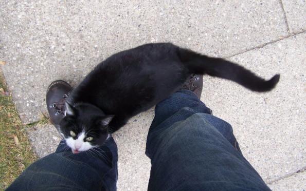 Dlaczego koty podskakują i opierają się o nas przy powitaniu?