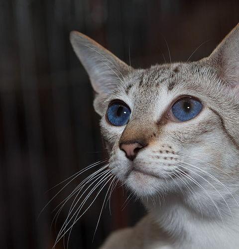 Czy koty mogą pić mleko?