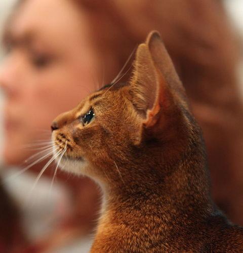 Czy koty przywiązują się do ludzi?