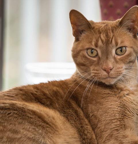 Czy koty są fałszywe?